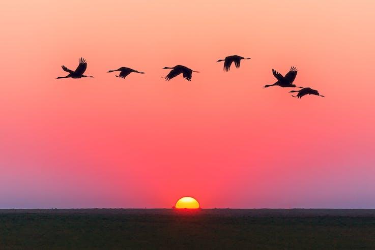 Світло для птахів