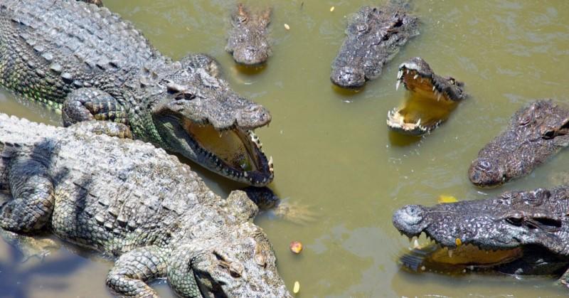 Прадавні крокодили ходили на двох ногах?