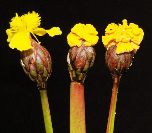 Фальшиві квіти