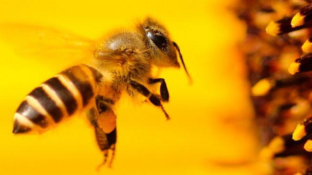 Причини загибелі бджіл