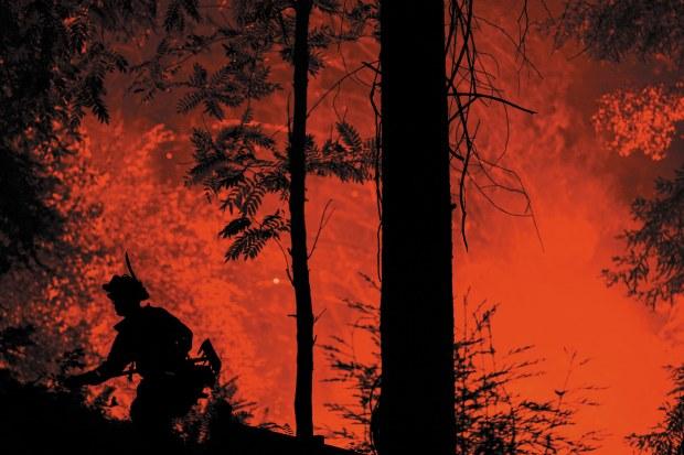 Як відновити ліс після пожежі?